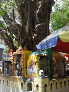 Yangon tree