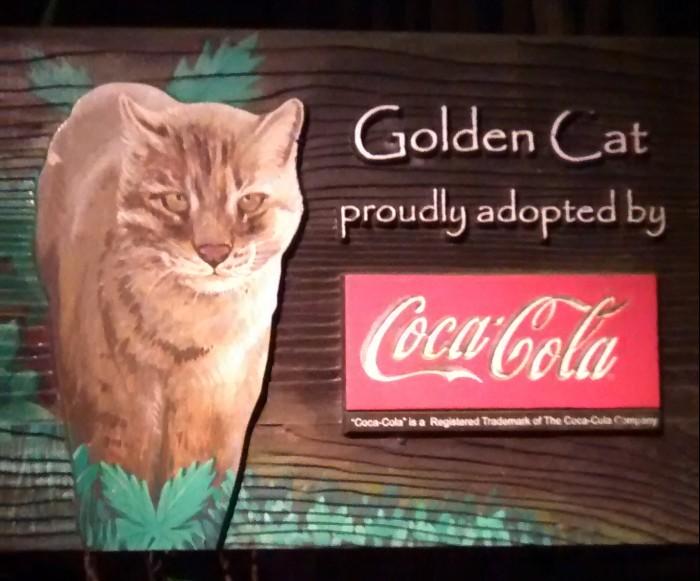Golden cat - SG zoo