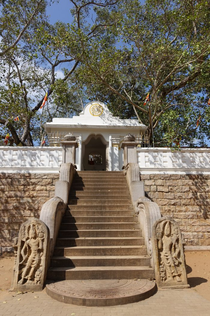 Le Bodhi tree sacré