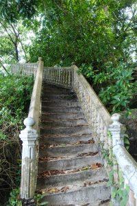 Escaliers perdus dans la jungle